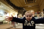 Visiting dinosaurs at the Smithsonian Museum of Natural History